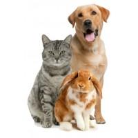 05. Товары для животных